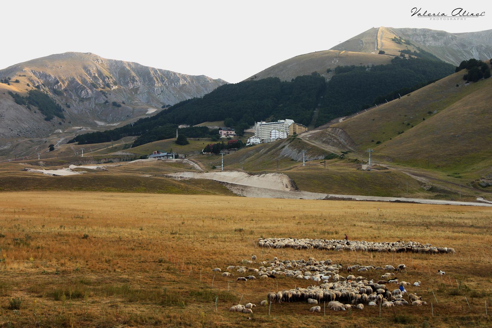 Pascolo all'Aremogna, Roccaraso